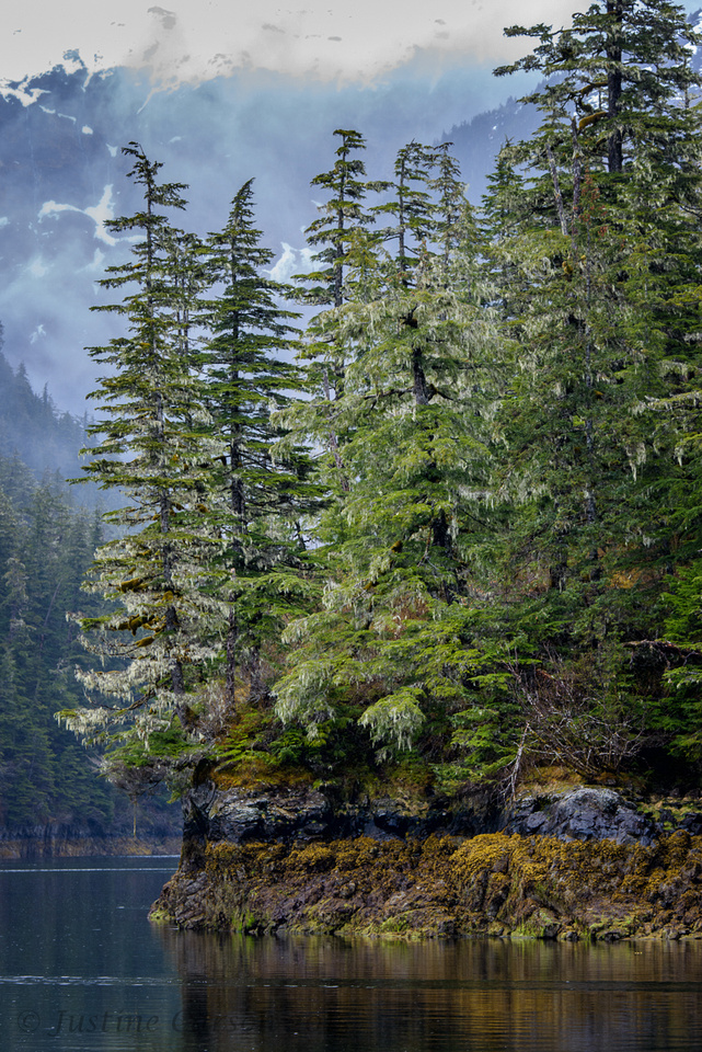 Rocky shoreline, temperate rainforest, Prince William Sound