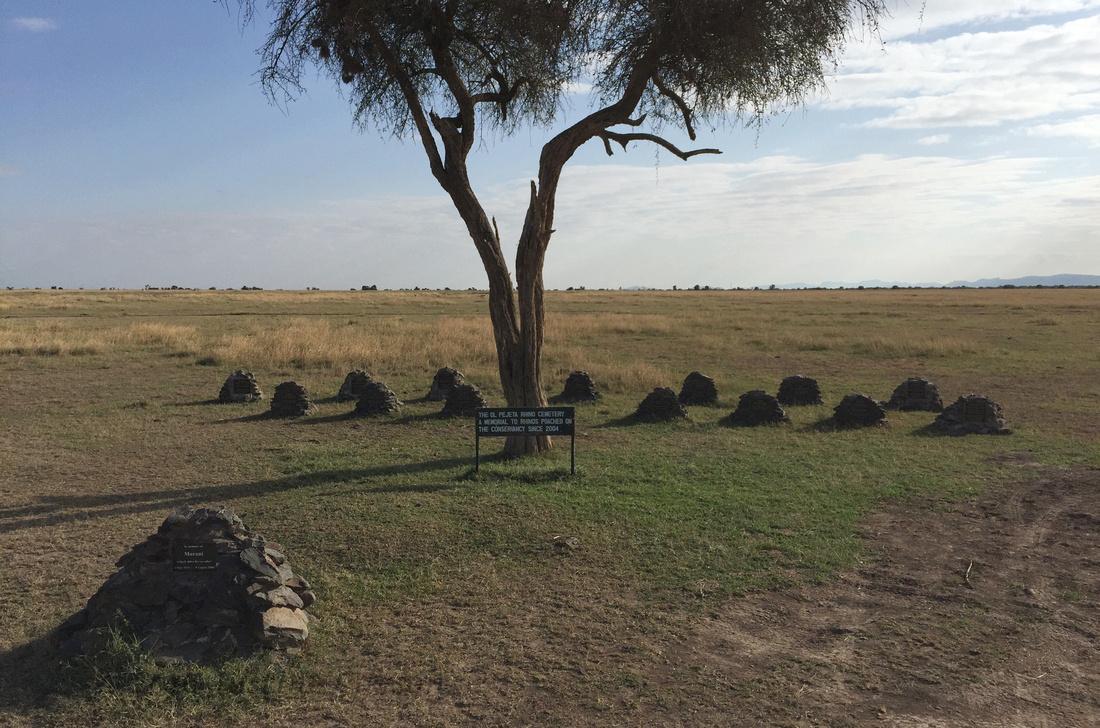 Rhino cemetery, Ol Pejeta Conservancy