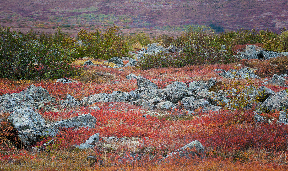 Fall color on the tundra, Alaska