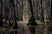 Reflections in Tupelo-Baldcypress swamp, Mississippi