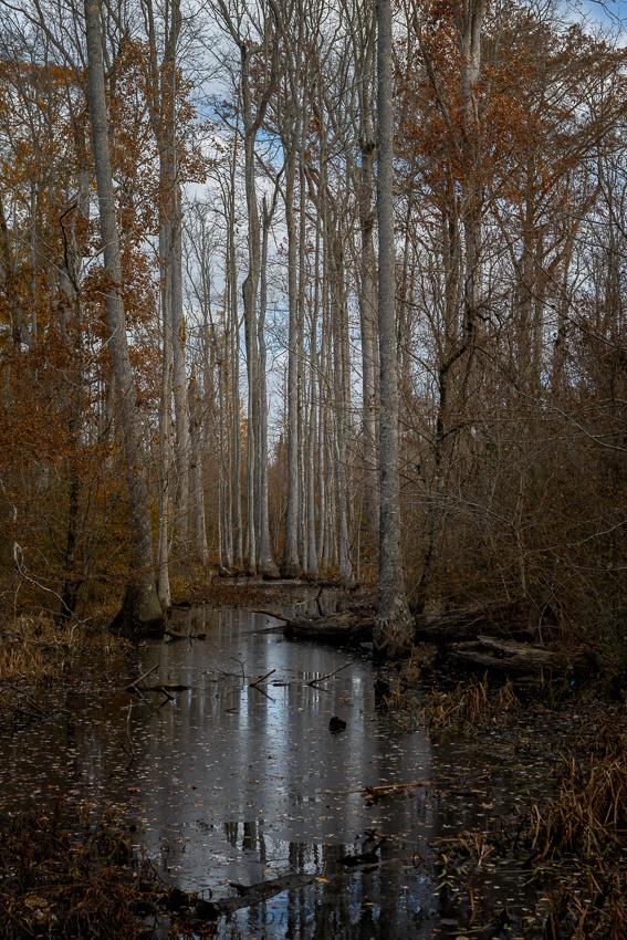 Tupelo-Baldcypress Swamp, Mississippi