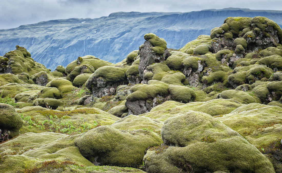 Eldhraun moss-covered lava fields, Iceland