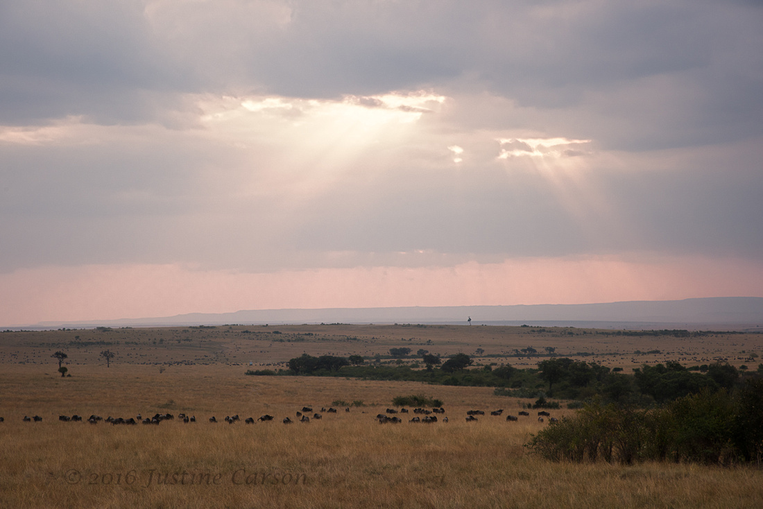 End of the day in the Maasai Mara