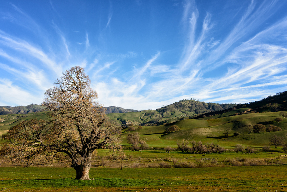 Rolling hills, ranchland, and oak, San Benito County, California