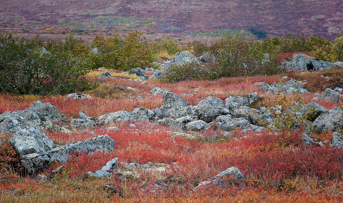 Fall color on the tundra, Alaska